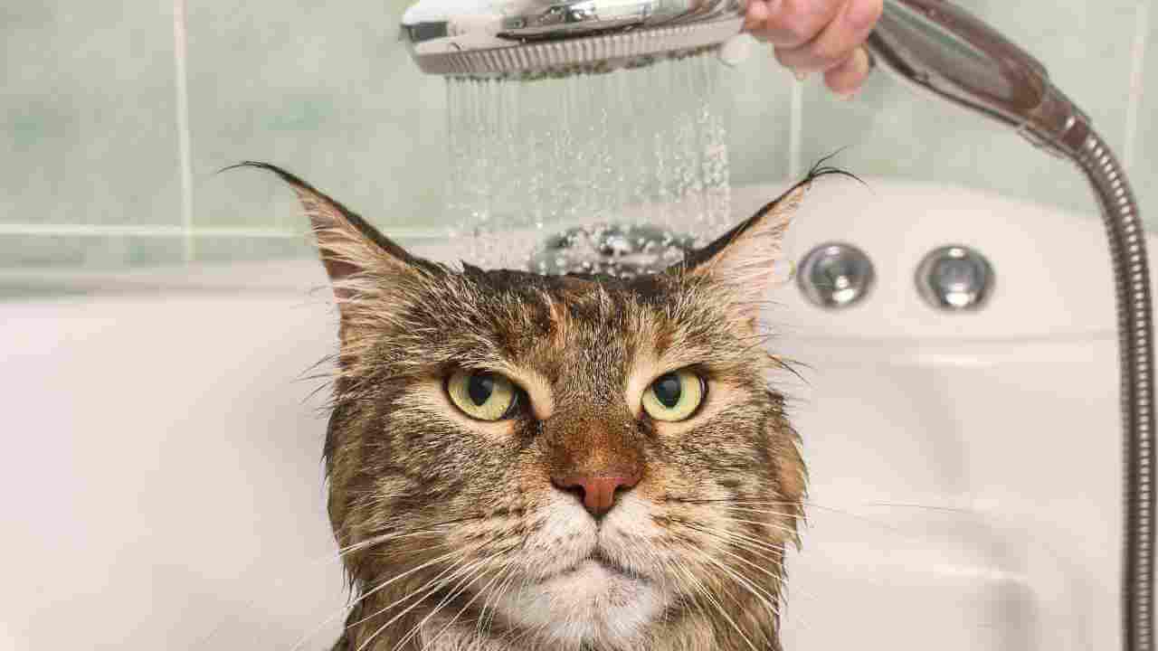 アラミック 節水 シャワー